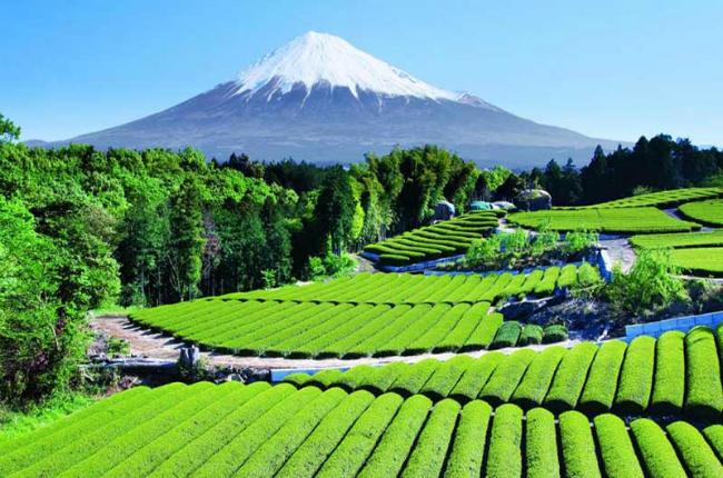 Du lịch Nhật Bản xứ sở thần tiên