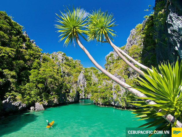 ve may bay gia re di philippines