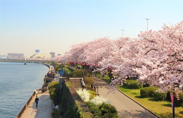Đặt ngay chuyến bay charter từ Nhật về Việt Nam giá